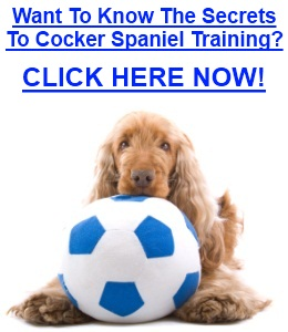 Cocker Spaniel Training
