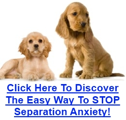 Cocker Spaniel Anxiety