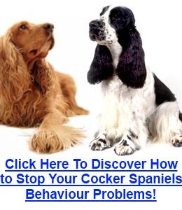 Cocker Spaniel Behaviour