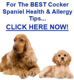 Cocker Spaniel Health