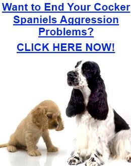 Cocker Spaniel Aggression