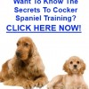 Training Cocker Spaniels