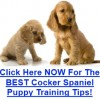Cocker Spaniel Puppy Training