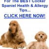 Cocker Spaniel Health Problems