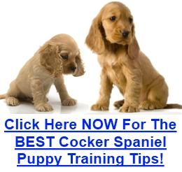 Training a Cocker Spaniel Puppy