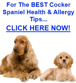 Cocker Spaniel Allergies
